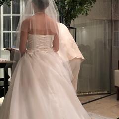息子が増えた/まさか、もぉ。。/初めての投稿/2018 今年一番は、娘の結婚^_^ 来年はおばあ…