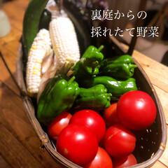 日常/おうちごはん/簡単 実家の裏庭で採れた野菜達🍅🍆🌽  かわい…