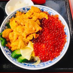 夏の思い出 青森はやっぱり海産物が美味しい😋  いく…(2枚目)