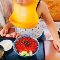夏の思い出 青森はやっぱり海産物が美味しい😋  いく…(4枚目)