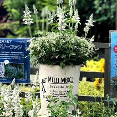 植物園 いつも出かける植物園🌱に、お庭のガーデニ…(2枚目)