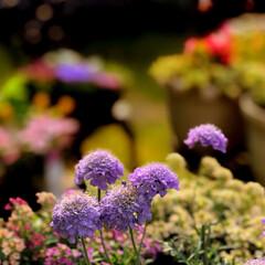 庭/住まい 鉢植のお花🌸