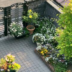 春/住まい/おうち自慢 門から玄関までのアプローチはお花🌸🌼を植…