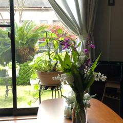 暮らし 自宅で過ごす今日この頃、庭のお花を💐リビ…(1枚目)