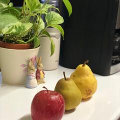 冬のフルーツ 林檎と洋梨2種類🤗頂きものです。良い香り…