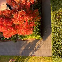 住まい 我が家の庭も紅葉して居ます🍁😊(2枚目)