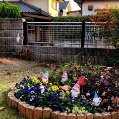 庭/住まい 円形花壇に冬のお花を植えました🌸😊🎶