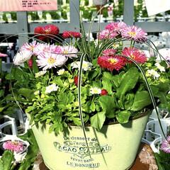 寄植鉢 行橋植物園の華やかな寄植え😊💕