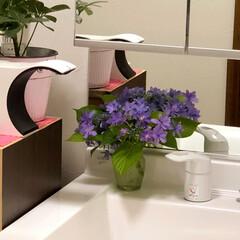 梅雨/住まい 洗面所にも庭の紫陽花を飾ってみました😊💕…