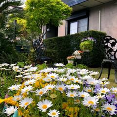 住まい 庭にお花がいっぱい咲いてくれました😊🌸💕
