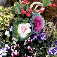 正月飾り 門扉前の植栽をお正月仕様にしました😊💕🎶(2枚目)
