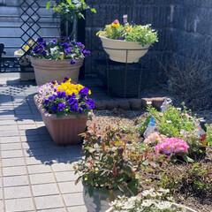 住まい 今日は春の陽気で庭の花達も綺麗に咲いてく…