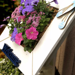 庭/グリーン/住まい/玄関 フラワースタンドのお花🌸を植え替えました…