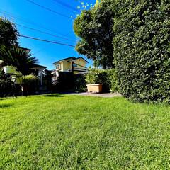 庭づくり お庭の芝生がフカフカになりました😊💕🎶(2枚目)
