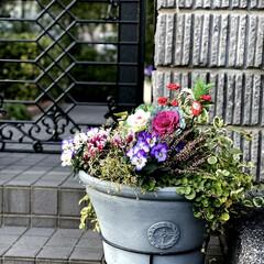 正月飾り 門扉前の植栽をお正月仕様にしました😊💕🎶