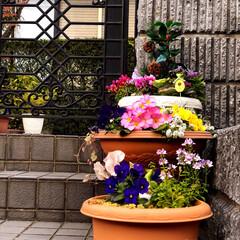 住まい 門の階段に寄植えを飾っています😊