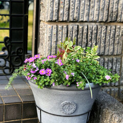 住まい 門の前に購入した新たな鉢に寄せ植えを行い…(1枚目)