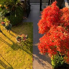 住まい 我が家の庭も紅葉して居ます🍁😊(1枚目)