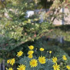 庭の花 庭に咲いているお花🌼を飾ってみた😊🎶(2枚目)