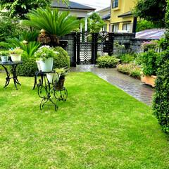 庭づくり 梅雨の雨☔️で芝生がグリーンになってきま…(1枚目)