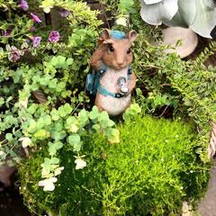 植物園 いつも出かける植物園🌱に、お庭のガーデニ…