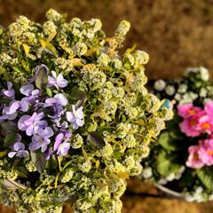 住まい 庭の花達🌸😊