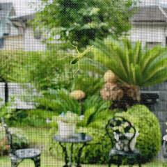 庭 朝からお客さまが、網戸に止まってます♪😊💕(2枚目)