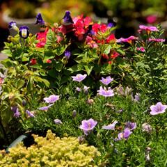 住まい 庭の花達も、暑さで大変だと思っていますが…