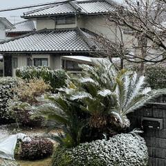 冬支度 昨夜の雨☔️がお昼に雪❄️に変わりました…