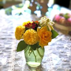 住まい 庭に咲いているお花を🌼積んで飾っています…