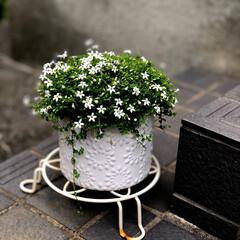 庭づくり/暮らし この季節は、お庭にお花が💐🌸🌼がいっぱい…