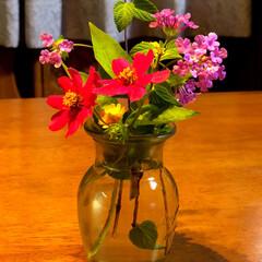 住まい 庭の花もすっかり少なくなりました。そろそ…