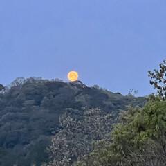 月と太陽 3月29日(月)朝のウォーキングで月🌕と…(1枚目)