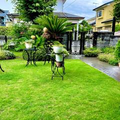 庭 久しぶりの雨☔️梅雨があけてから降ってい…(1枚目)