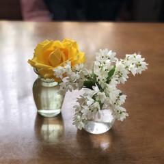 暮らし 庭に咲いている薔薇、姫うずき、えびね蘭を…