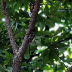 住まい 庭の欅で蝉がうるさく、朝から鳴いています…(1枚目)