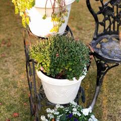 庭/住まい 庭の植木鉢も冬のお花を植えました🌸😊🎶