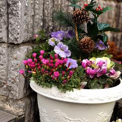 住まい 門の階段に寄植えを飾っています😊お日様が…