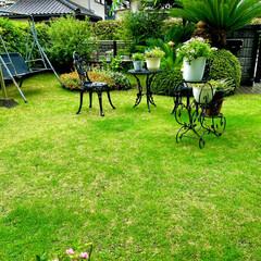 庭づくり 梅雨の雨☔️で芝生がグリーンになってきま…(2枚目)
