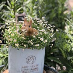 植物園 珍百景で紹介された、行橋植物園には様々な…(10枚目)