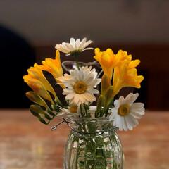 住まい 庭のお花🌸がたくさん咲いたので、フリージ…