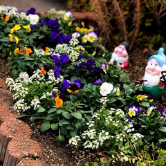 庭/住まい 門の横の花壇も植え替えました😊💕 植物園…
