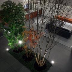 不動産・住宅/外観/モダン/コンクリート/中庭 KaleidoscopeⅥ