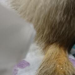 AquaX ペットのお手入れスプレー    AquaX(アクアエックス)(その他ペット用品、生き物)を使ったクチコミ「本日、届きました〜  ペットのお手入れ用…」(3枚目)