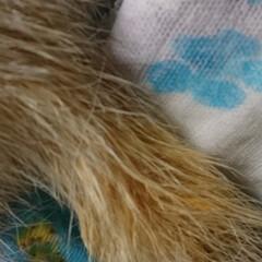 AquaX ペットのお手入れスプレー    AquaX(アクアエックス)(その他ペット用品、生き物)を使ったクチコミ「本日、届きました〜  ペットのお手入れ用…」(4枚目)