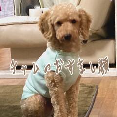 家族 保護犬チャム トライアル終了 本日🏡正式…