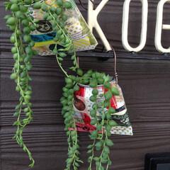 マスキングテープ/多肉植物/リメ缶 アルミ缶でリメ缶バッグをつくり、ヒグチユ…