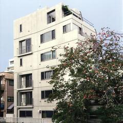 浸透性防汚剤塗布/コンクリート打放し 外壁はコンクリート打放し・浸透性防汚剤塗…