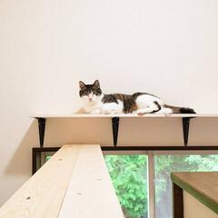 DIY/キャットトンネル/キャットウォーク/猫のいる暮らし/ねこ/ネコ/... 壁をぶっ壊してキャットトンネルとキャット…(9枚目)
