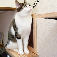 DIY/キャットトンネル/キャットウォーク/猫のいる暮らし/ねこ/ネコ/... 壁をぶっ壊してキャットトンネルとキャット…(2枚目)